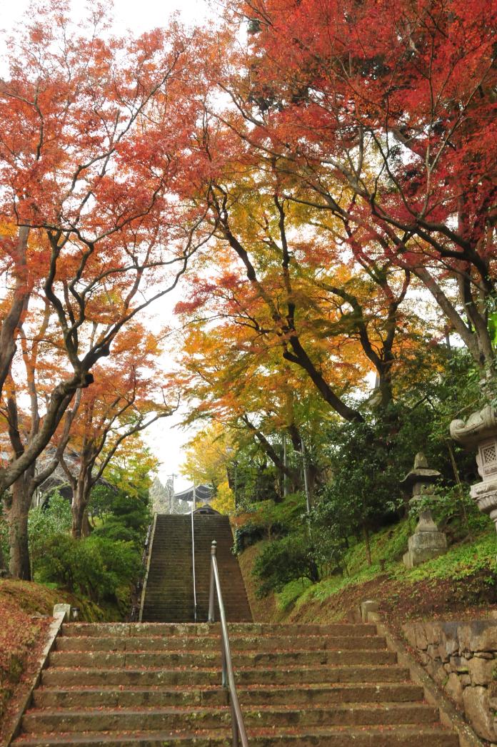 優秀賞 紅葉のトンネル